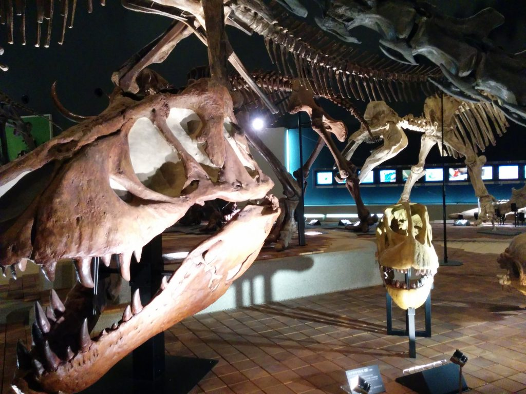 地球博物館 生命を考える