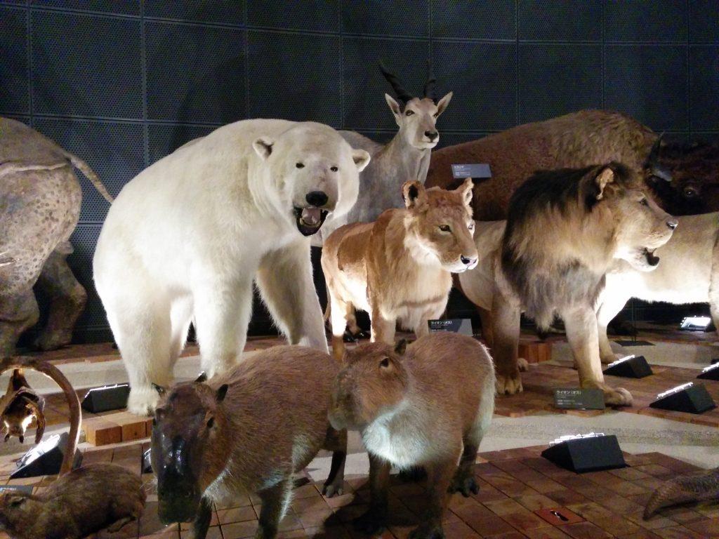 ほ乳類 剥製 地球博物館