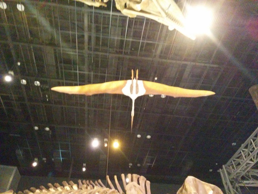 ケツアルコアトル 地球博物館