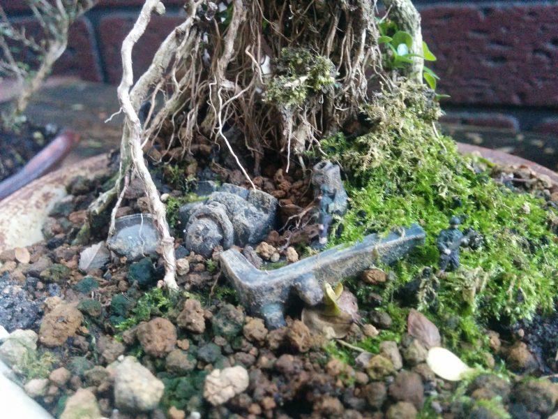 ハクチョウゲの根に包まれるザク