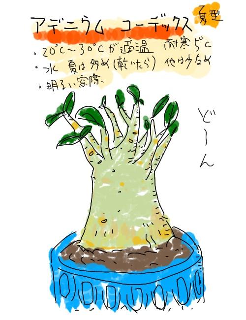 HUION ペンタブレットHS64 で書いたアデニウムの絵