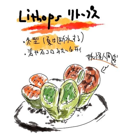 リトープス 冬型 妖怪人間みたいな植物