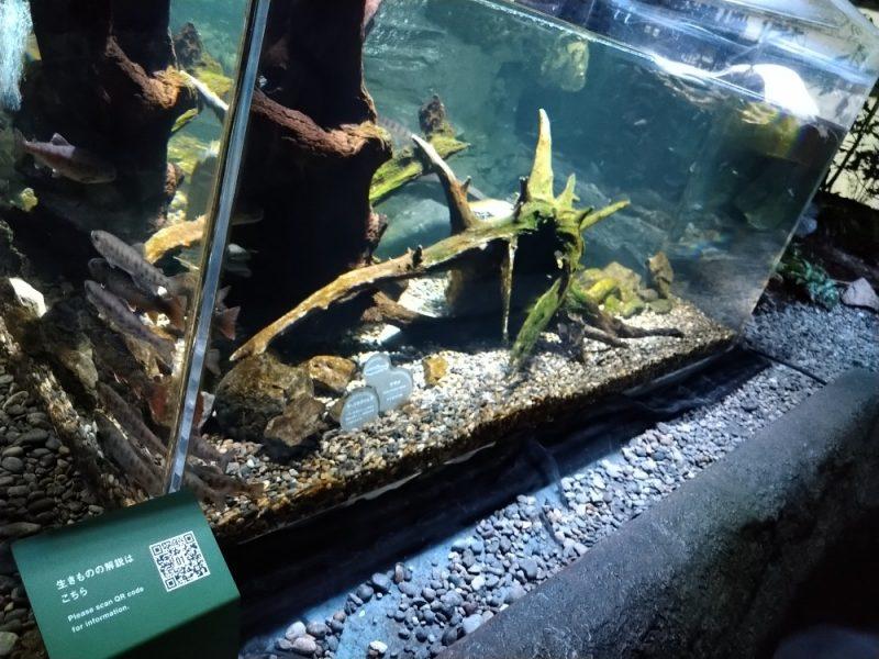 カワスイ 川崎水族館 QRコードを読み込む