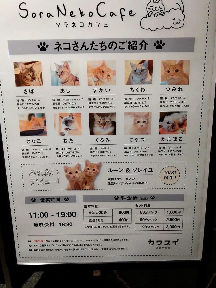 カワスイ 川崎水族館 ソラネコカフェ