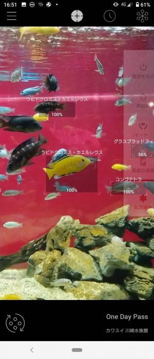 「AI図鑑リンネレンズ」魚をスキャンしまくれ!